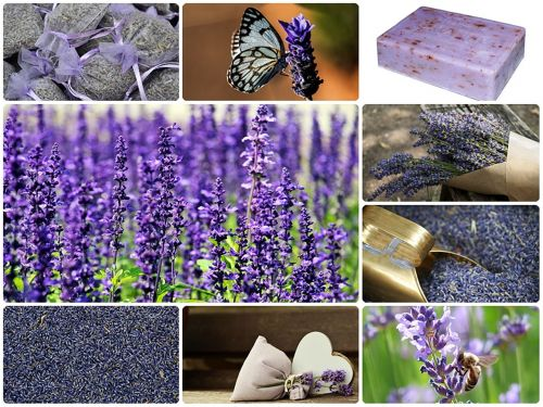 lavender collage lavender collage