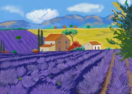 lavender lavender flowers true lavender