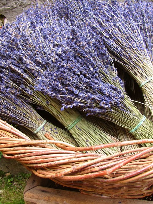 lavender  dried  plant
