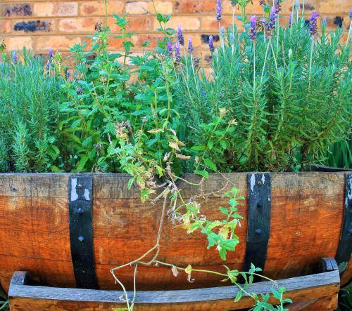 Lavender Barrel