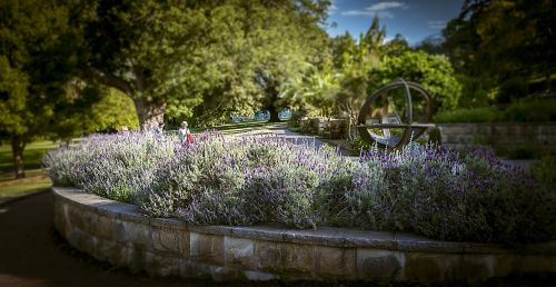 lavender garden therapeutic aromatherapy