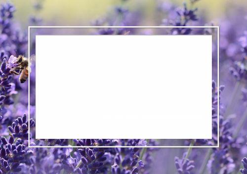 Lavender Photo Frame