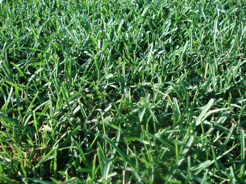 lawn turf environment