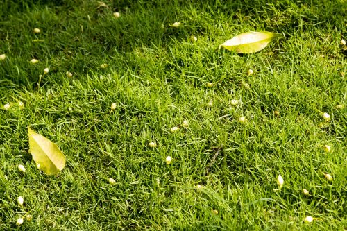lawn green grass green lawn grass