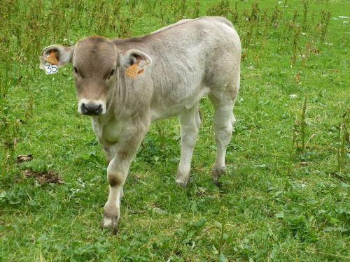 lawn mammal animal