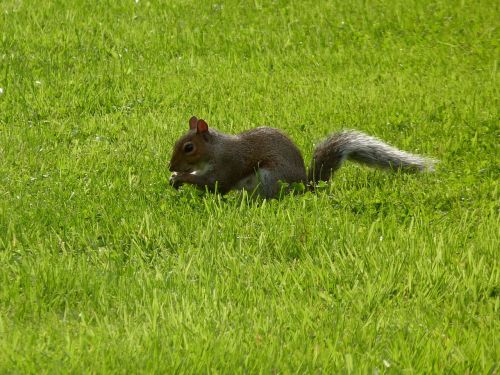 lawn mammals nature