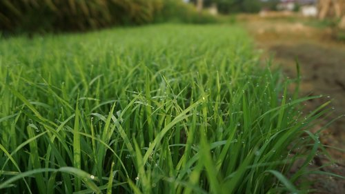 lawn  field  kinds of food