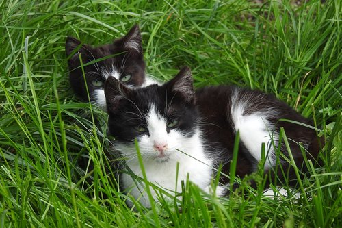 lawn  charming  animals