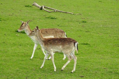 lawn  animals  mammals
