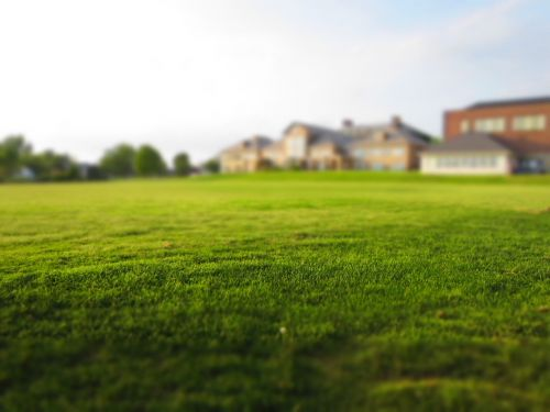 lawn grass mowing