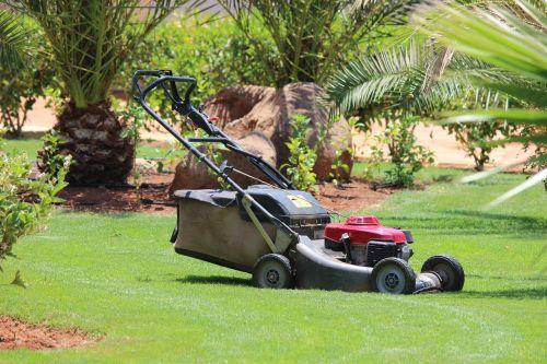 lawn mower lawn grass