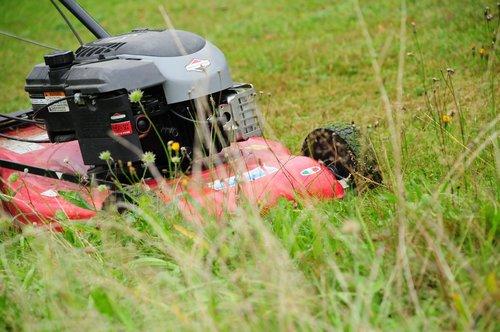 lawn mower  grass mulch  rush