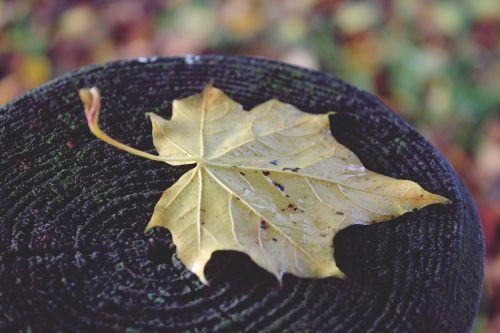 leaf post wood