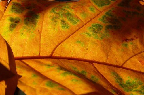 leaf back light light