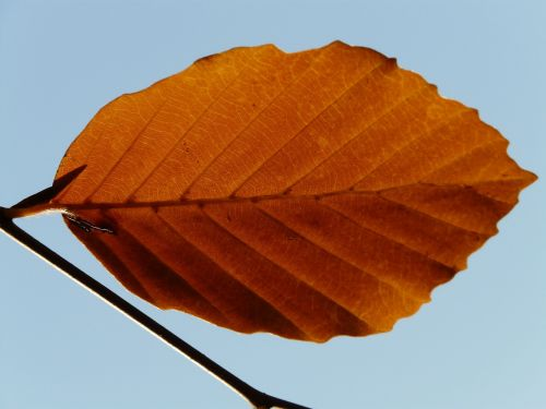 leaf lonely alone