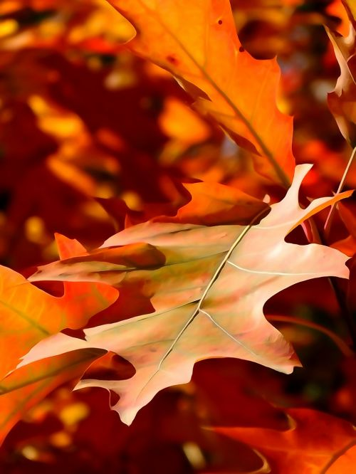 leaf autumn the decrease in