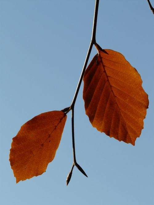 leaf pair two
