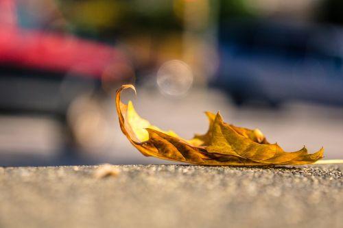 leaf sidewalk alone