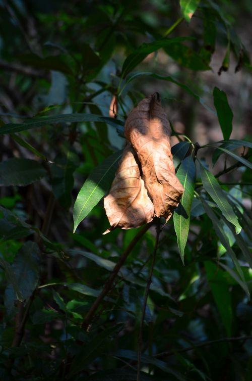 leaf dry leaf fall