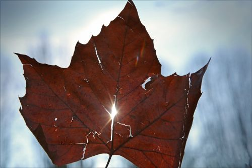 leaf light sky