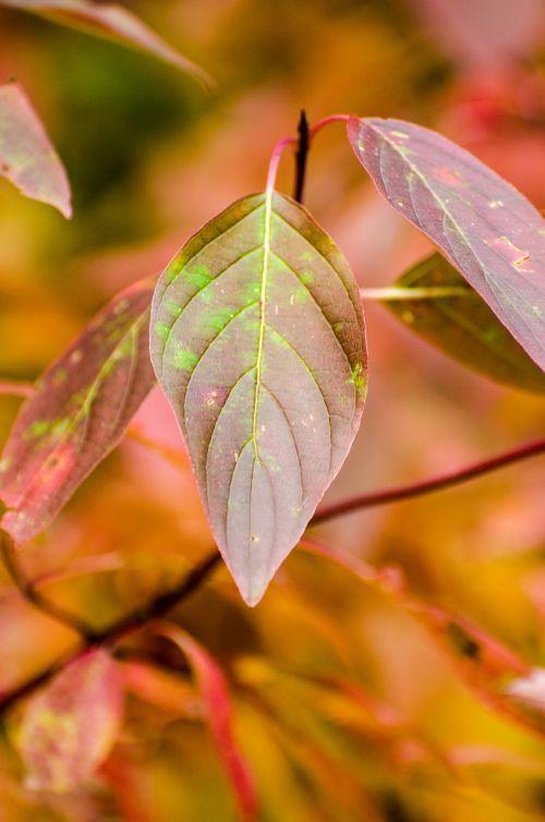 leaf leaves fall