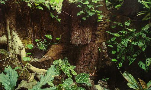 environment leaf green