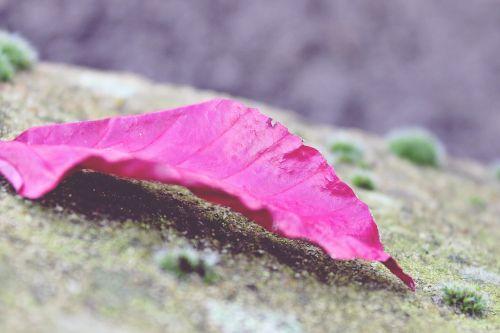 leaf red moss
