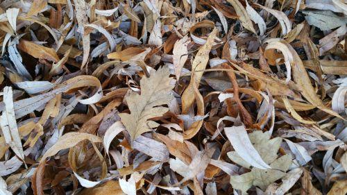 leaf leaves dry