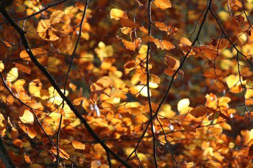leaf backlight autumn