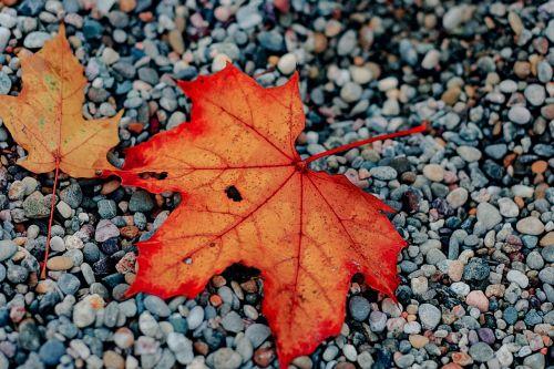leaf autumn fall