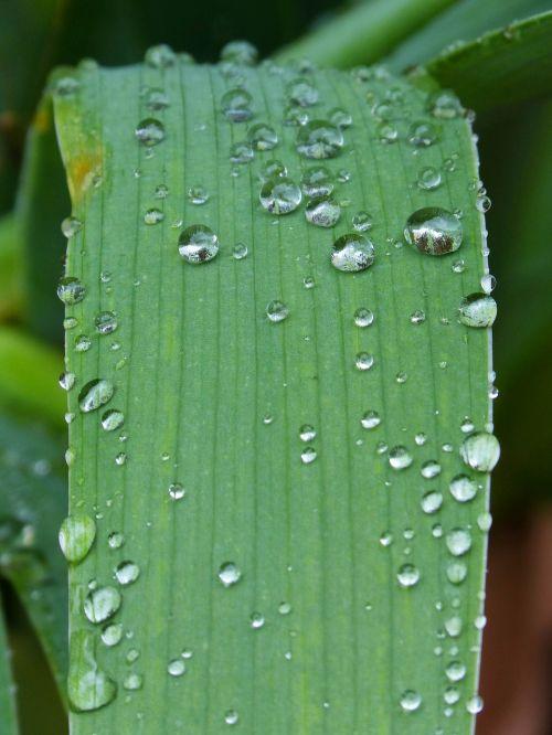 leaf drops rocio