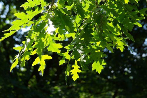 leaf green back light