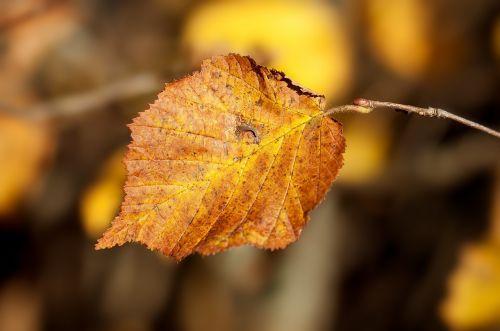 leaf autumn leaf autumn