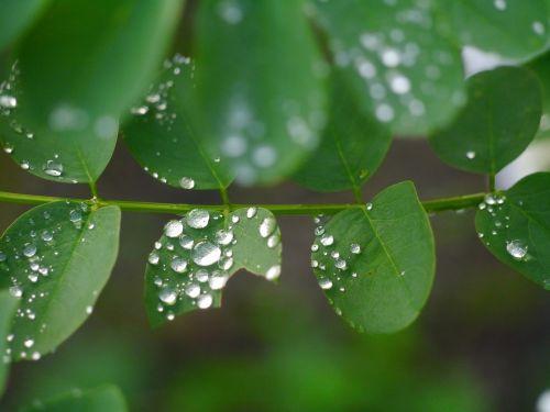 leaf grass rain