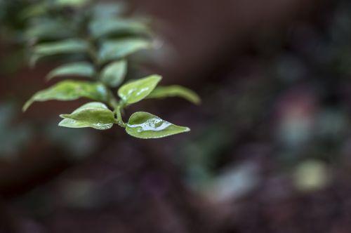 leaf small cute