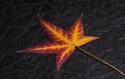 leaf foliage leaf colorful