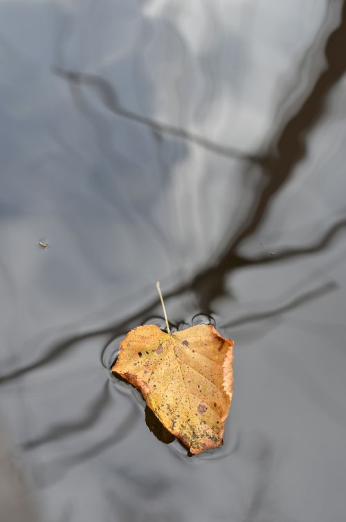 leaf floating mast