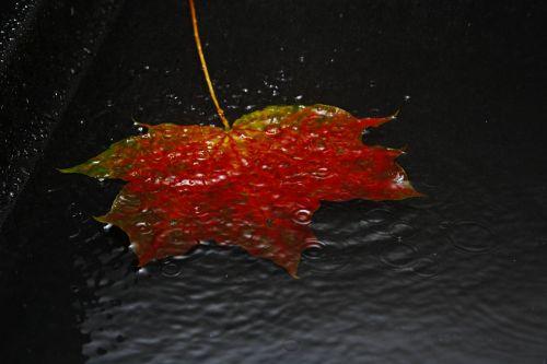 leaf autumn autumn leaf