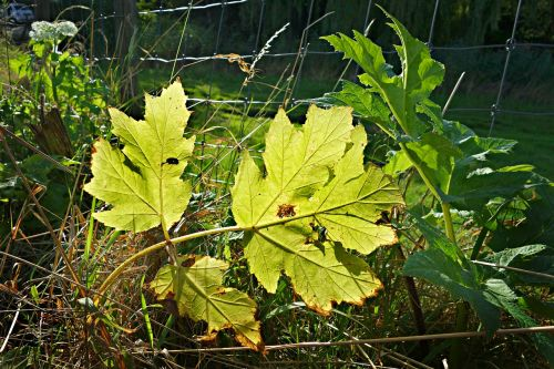 leaf plant vein