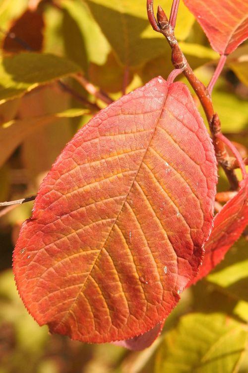 leaf colorful-leaf fall color