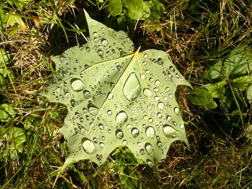 leaf water droplets magnification