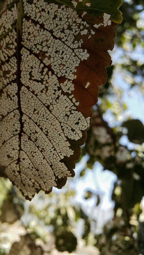 leaf tree white