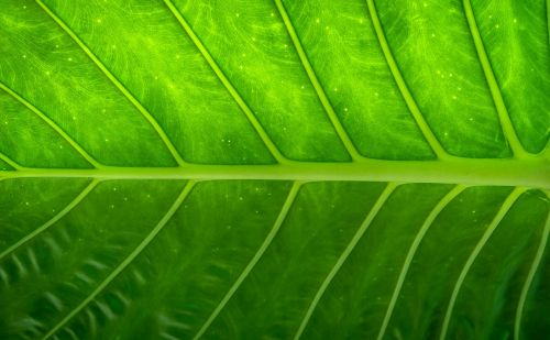leaf nature wood