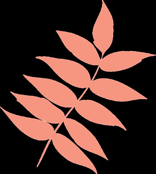 leaf autumn leaf dry leaf