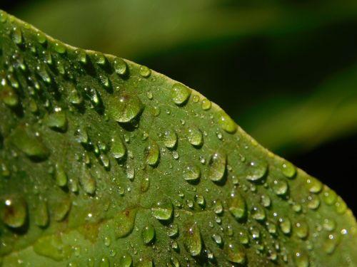 leaf drop of water raindrop