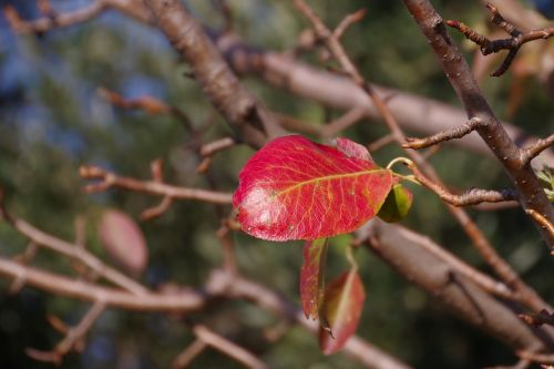 leaf leaves plant