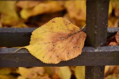 leaf autumn sheet in the autumn