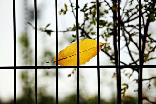 leaf fence grid