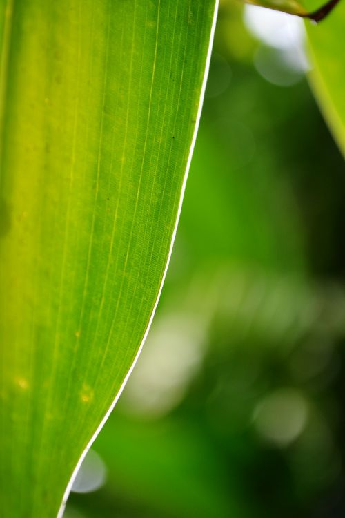 leaf green leaf light on leaf