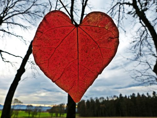 leaf heart red